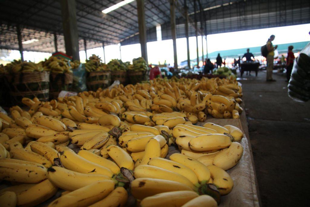 Bananen in Hülle und Fülle