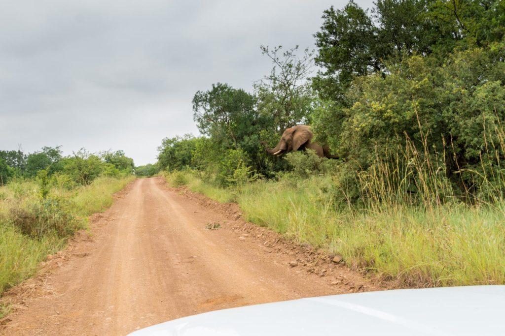 beware of hidden elephants