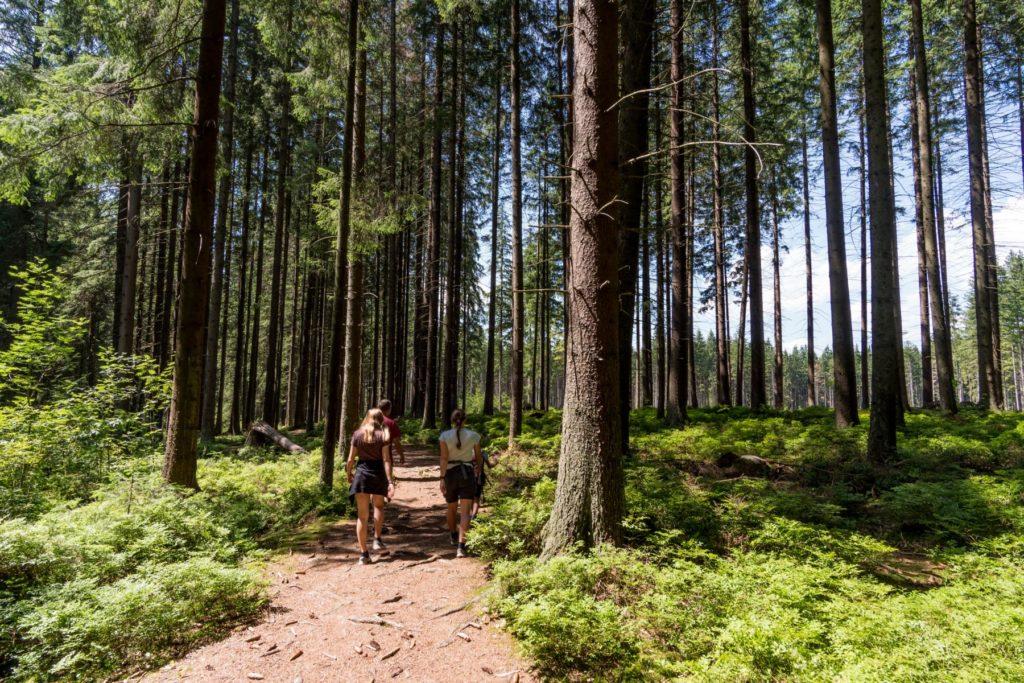 slowakische Wälder